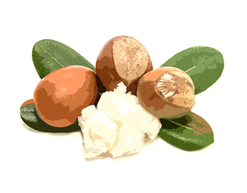 Shea-Butter-Ingredients